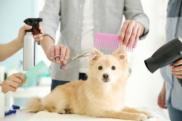 動物と関係する職業